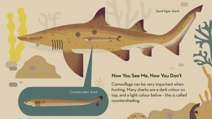 Sharks_5