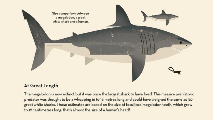 Sharks_Megalodon